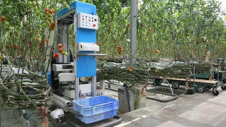 Компания Panasonic разработала робота для сборки томатов