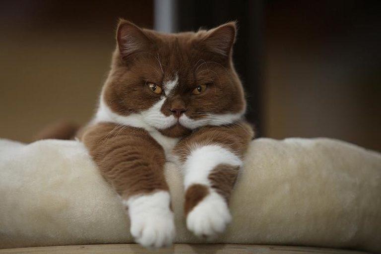 Профсоюз музейных котов появится в Петербурге