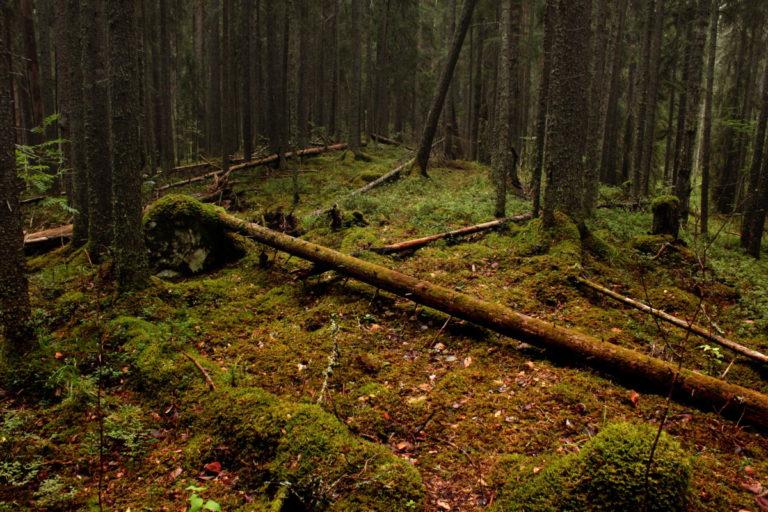 Курганцам разрешили бесплатно собирать поваленные в лесу деревья
