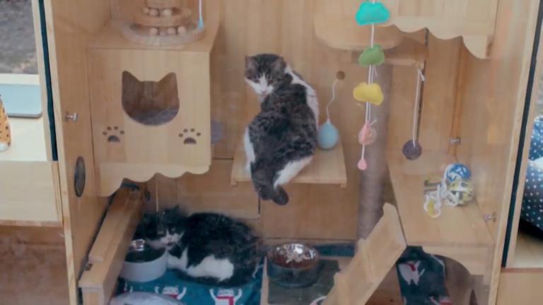 Китайский инженер создал первый в мире автономный приют для кошек