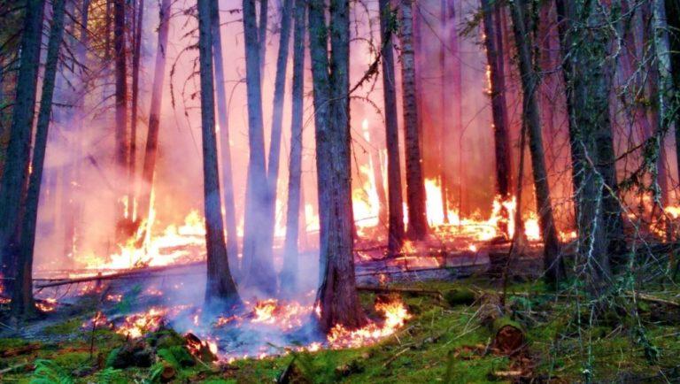 Курганские власти выплатят 10 тысяч рублей за информацию о поджигателях лесов