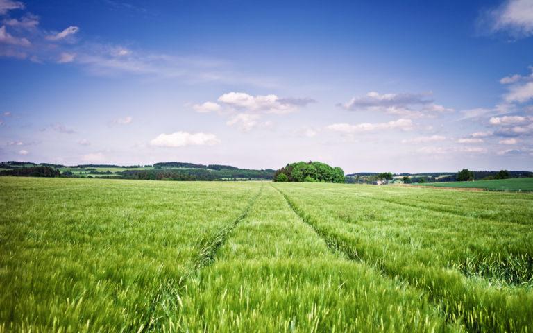 В Курганской области вернут в оборот 140 тысяч гектаров заброшенных сельхозземель