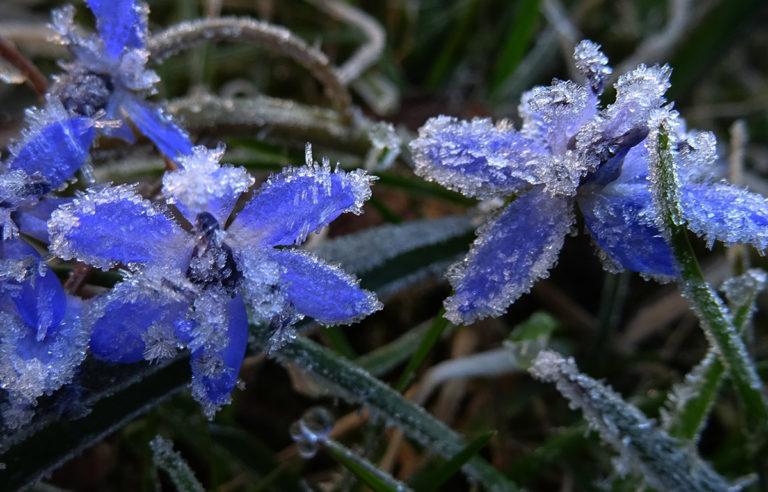 Заморозки в воздухе и на почве сохранятся в Курганской области