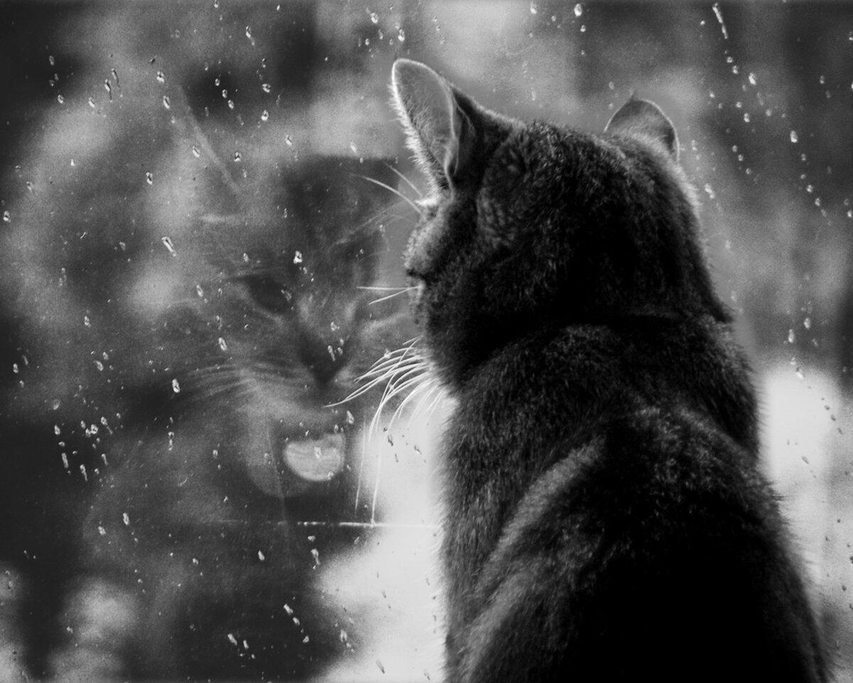 будете картинка грустит погода мне то, брежнева