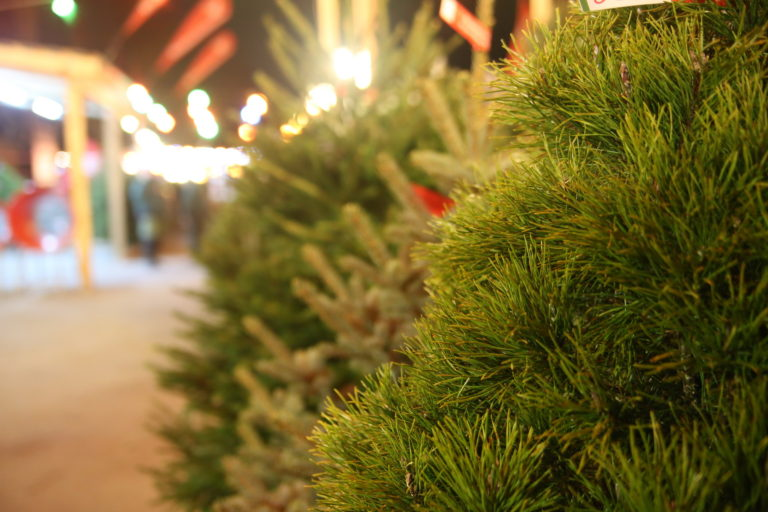В Кургане изменились правила торговли новогодними елками