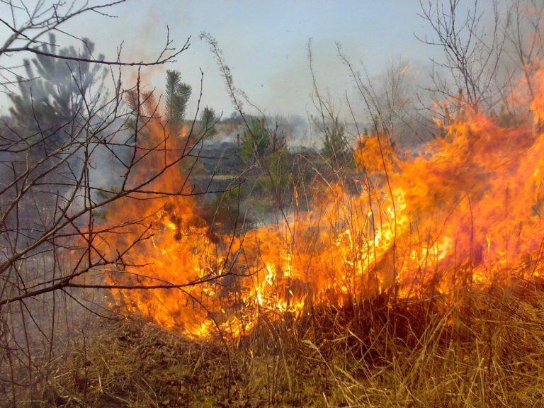 Высокая пожарная опасность сохранится в Курганской области по 8 июня