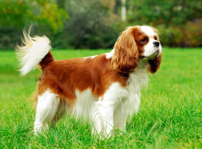 Составлен список пород собак, подходящих для детей