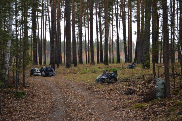 В лесах Рябково и на «Голубых озерах» прошел день чистоты