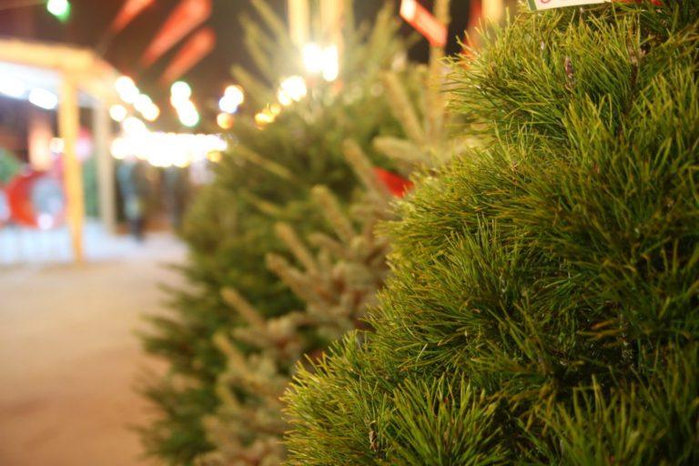 Жителям Кургана предложили грамотный алгоритм утилизации новогодних елок