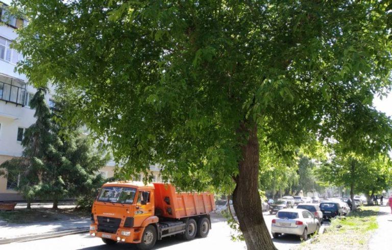 В Кургане отремонтируют дорогу и снесут 12 деревьев у поликлиники №1