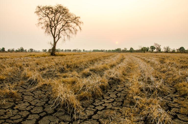 Режим ЧС из-за засухи вводится в Курганской области с 27 июля